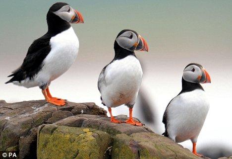 "UK bird species ""face extinction"""