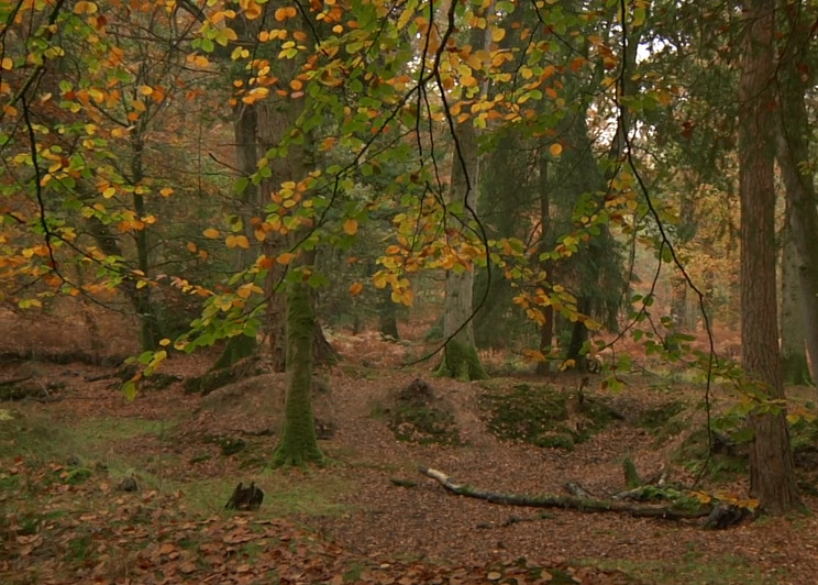 National Lottery secures New Forest's future