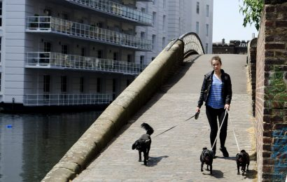 Dogs per walker looking to decrease
