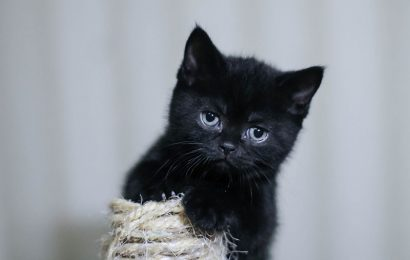 Black kitten's lives threatened on Halloween