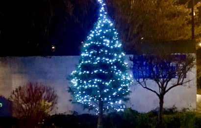 The event Tree for Light adds a sprinkle of happiness in Southampton
